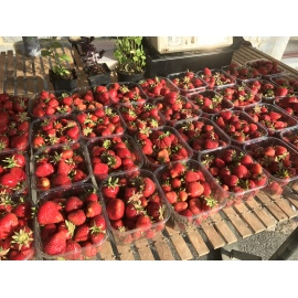 Fraise Darselect